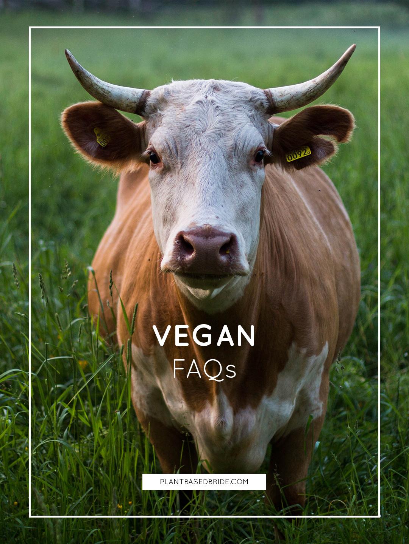 Vegan FAQs // Plant Based Bride