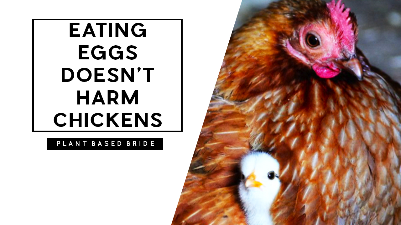 Eating Eggs Doesn't Harm Chickens #VeganMythBuster // Plant Based Bride