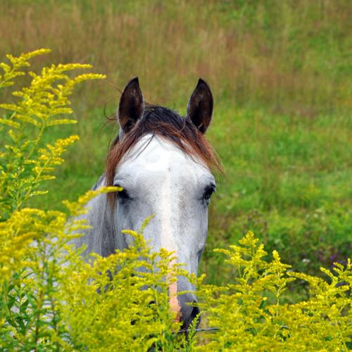 horse_5538302654_o.jpg