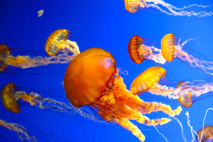jellyfish_5538302356_o.jpg