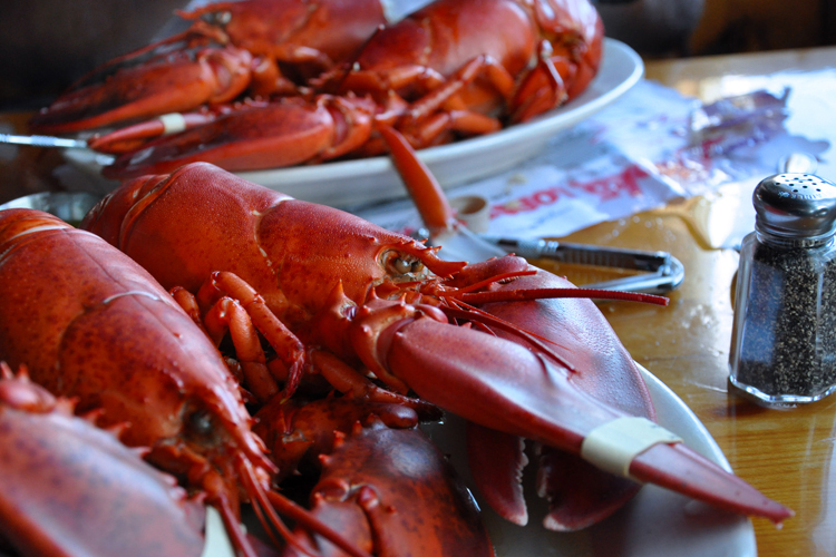 maine-lobster_5537724969_o.jpg