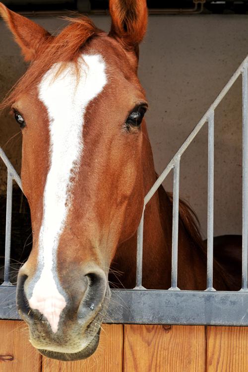 pt_horse.png