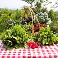farm share.jpg