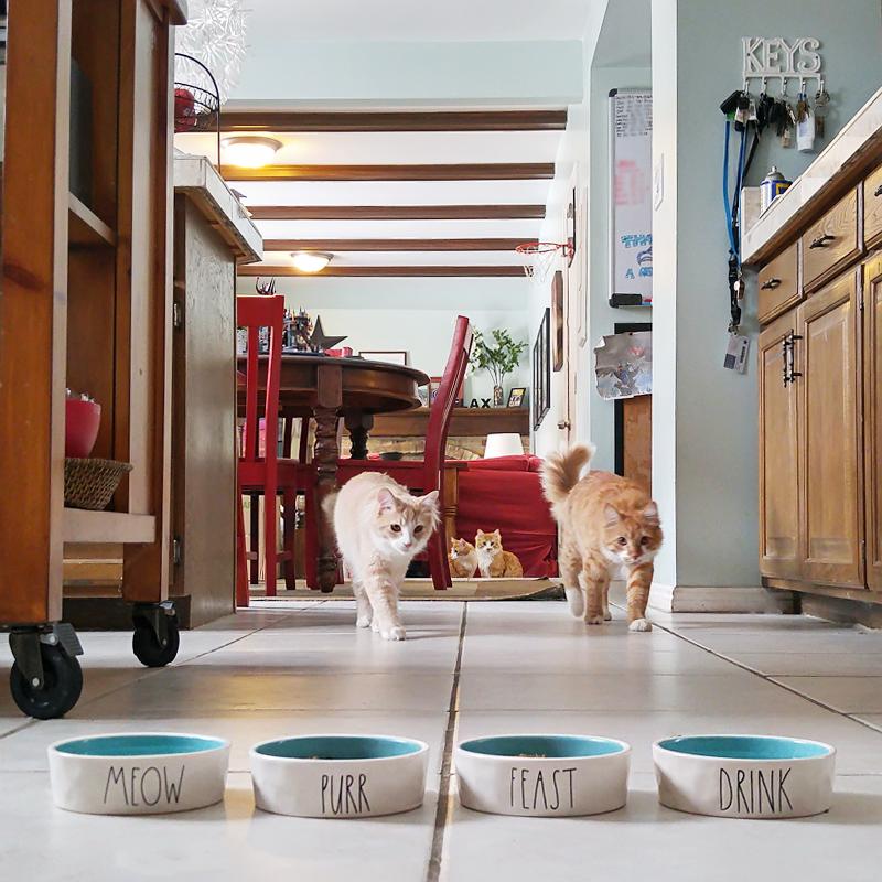 salt-lake-city-photographer-good-stuff-cat-dishes.jpg