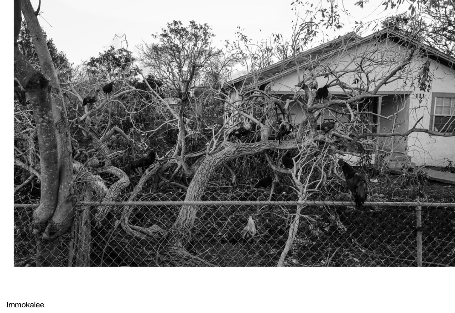 Robert LeBlanc Hurricane Irma %22Welcome To Paradise%22-25.jpg