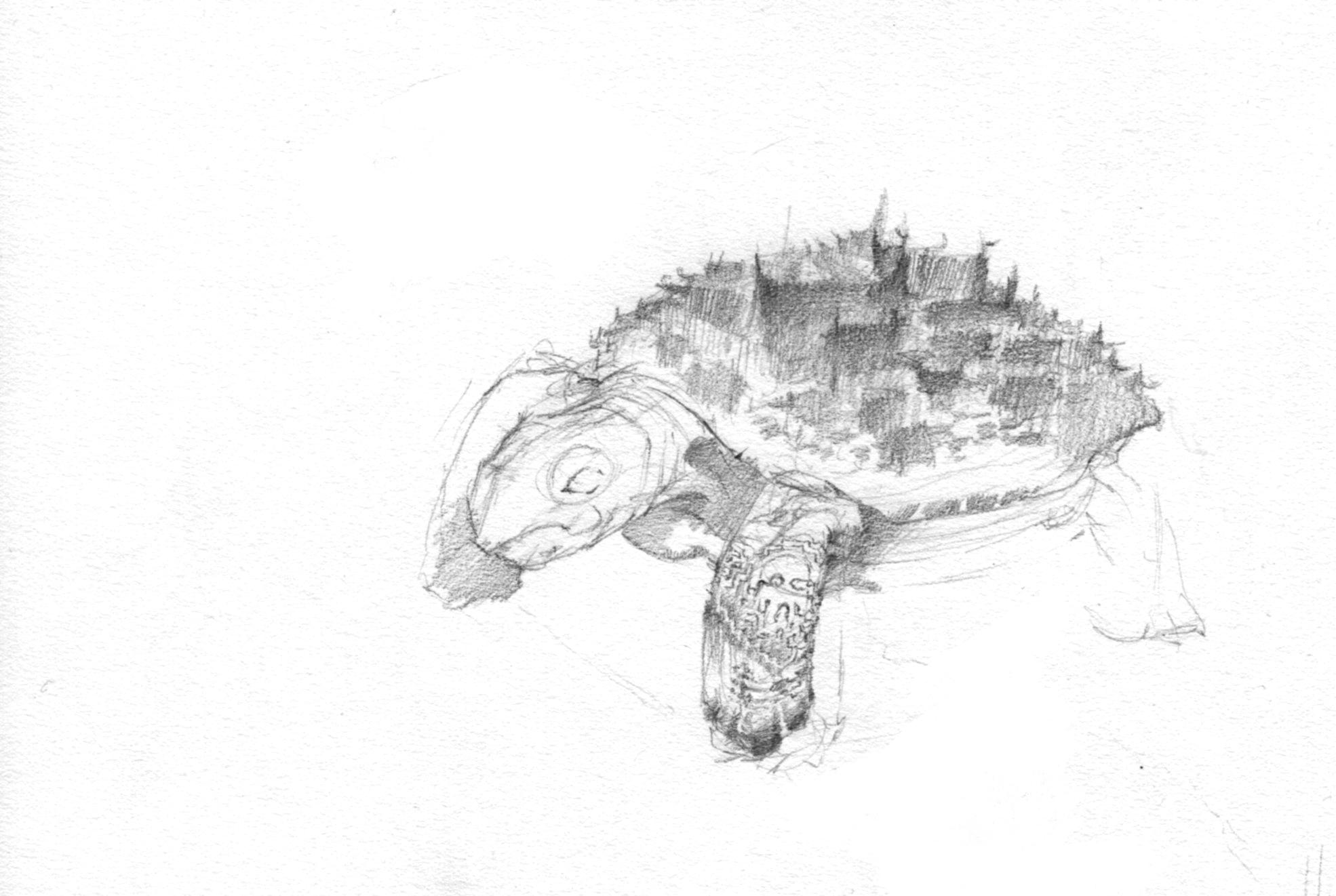 Tortoise city