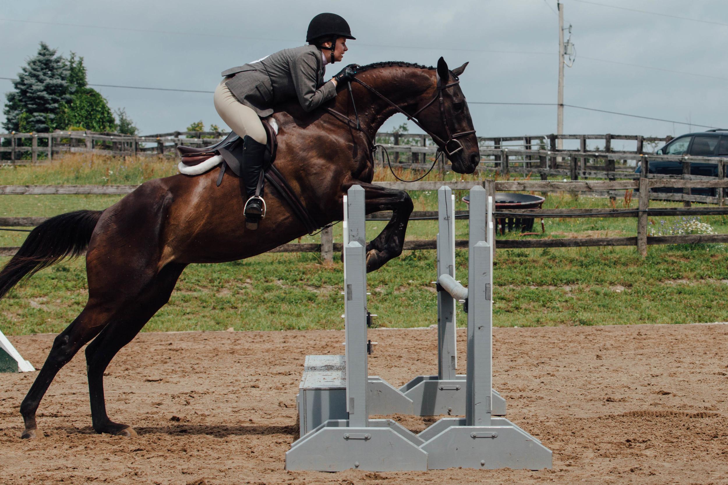vsco edit horse show-1.jpg