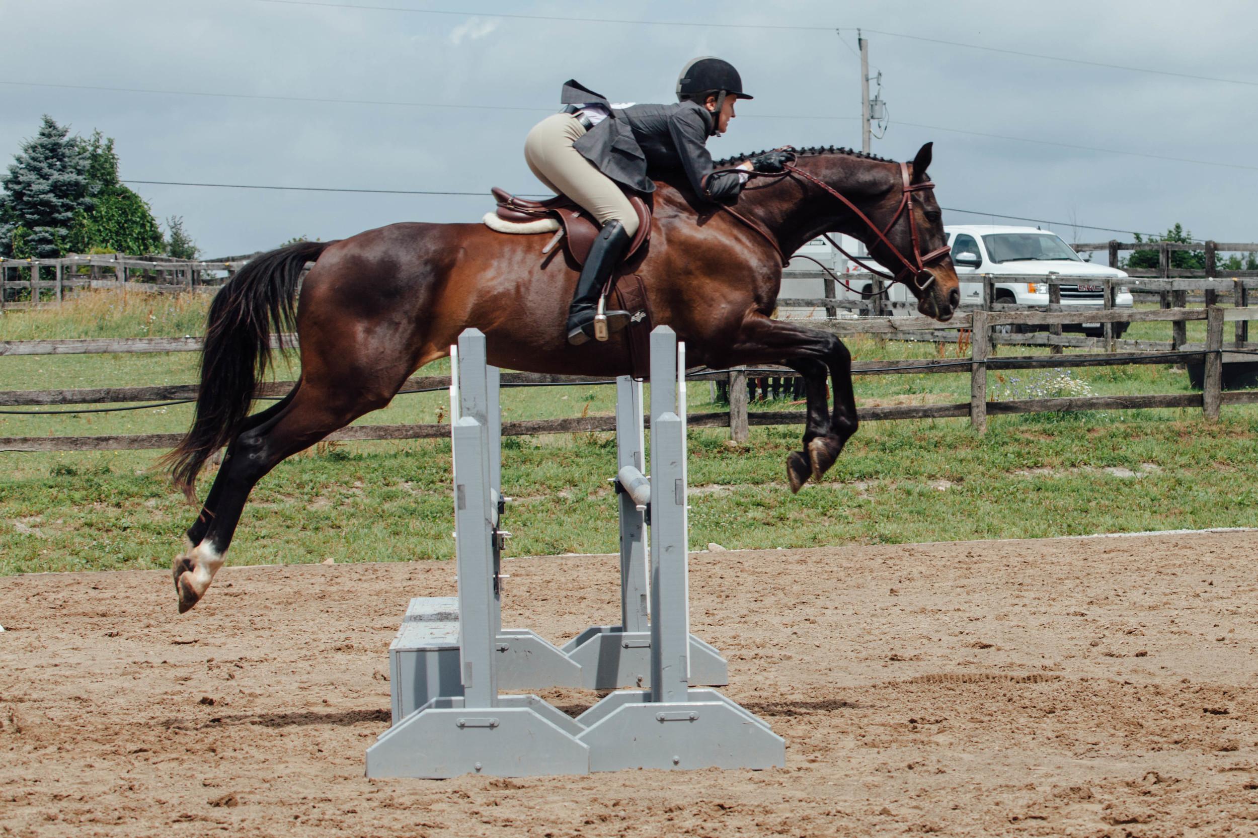 vsco edit horse show-3.jpg