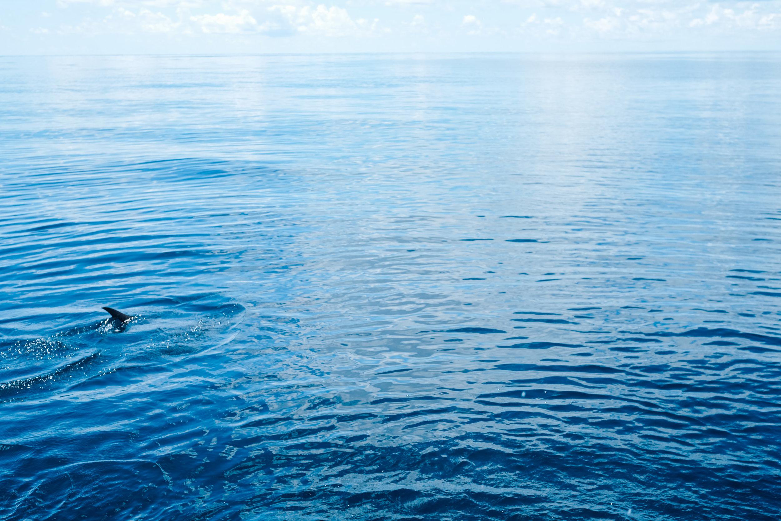 WaterSound2016-258.jpg