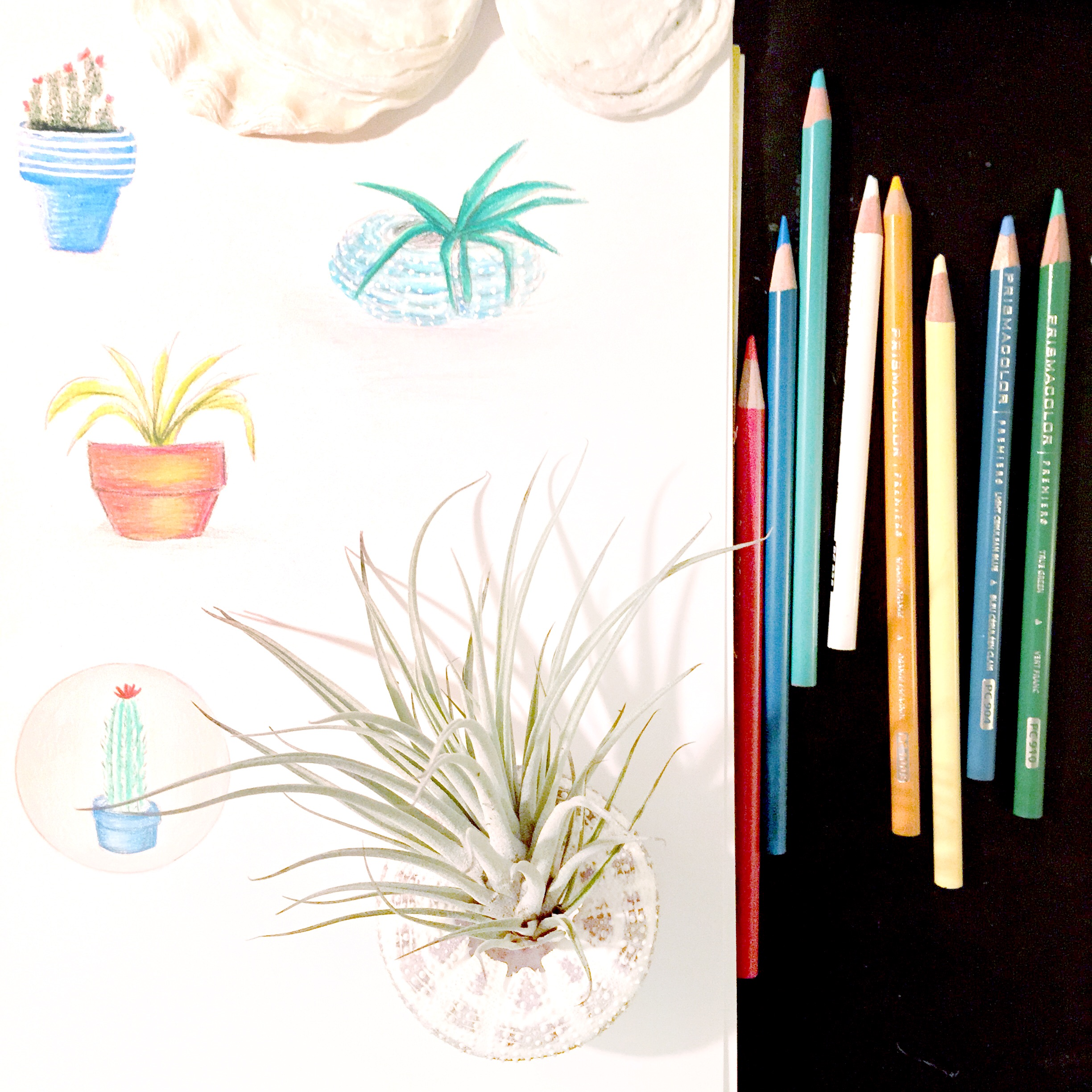 Mini plant sketches with colored pencils.