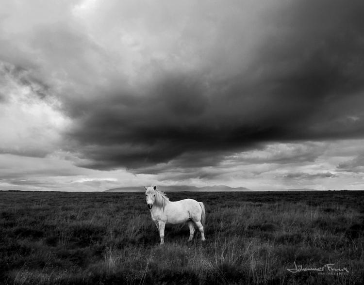 johannes_horse_1.jpg
