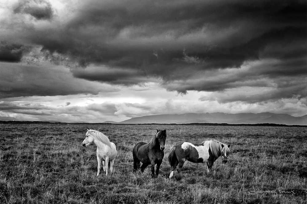 johanness_horse_2.jpg