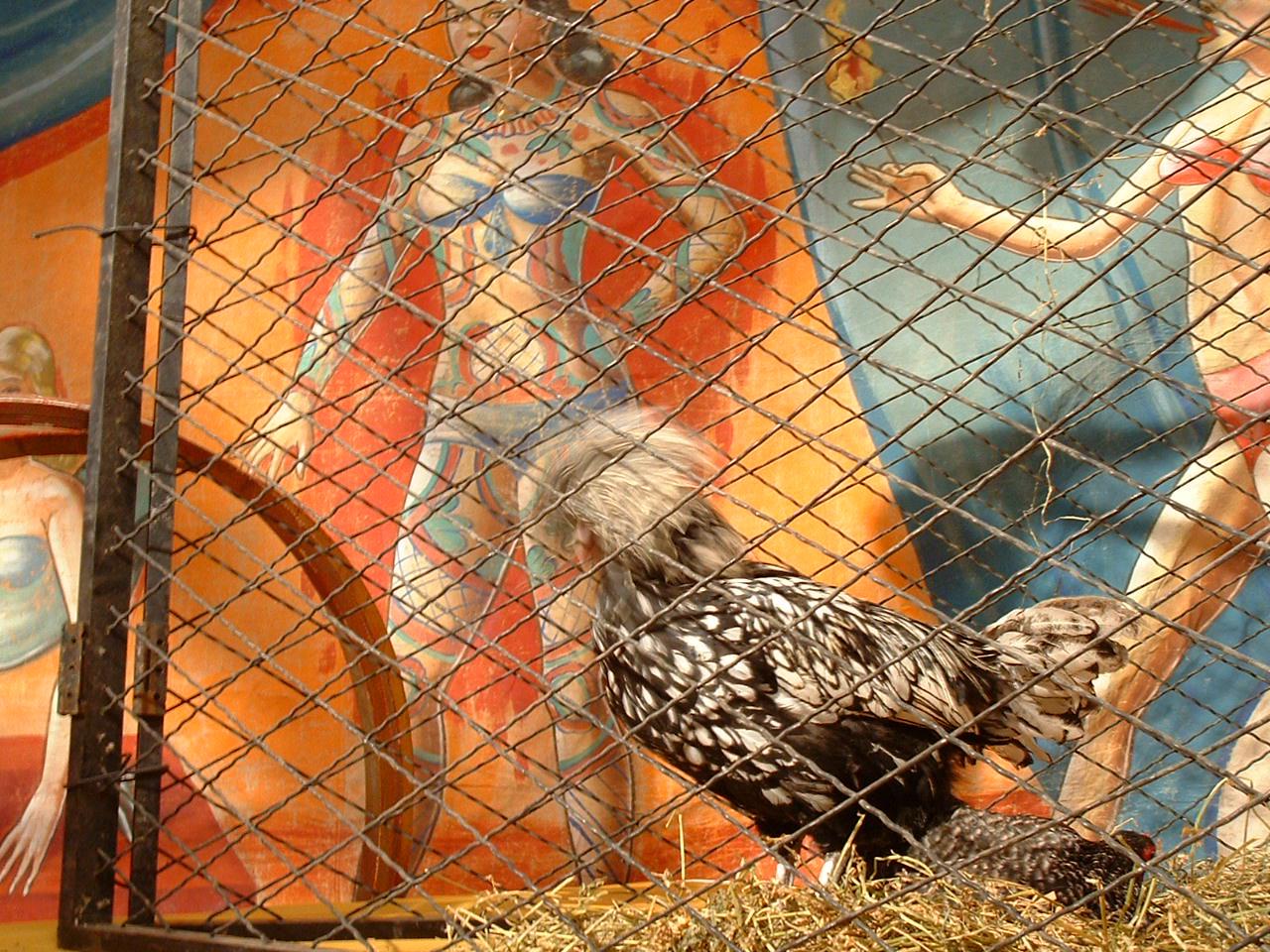 funcky chicken N.E.R.D.jpg