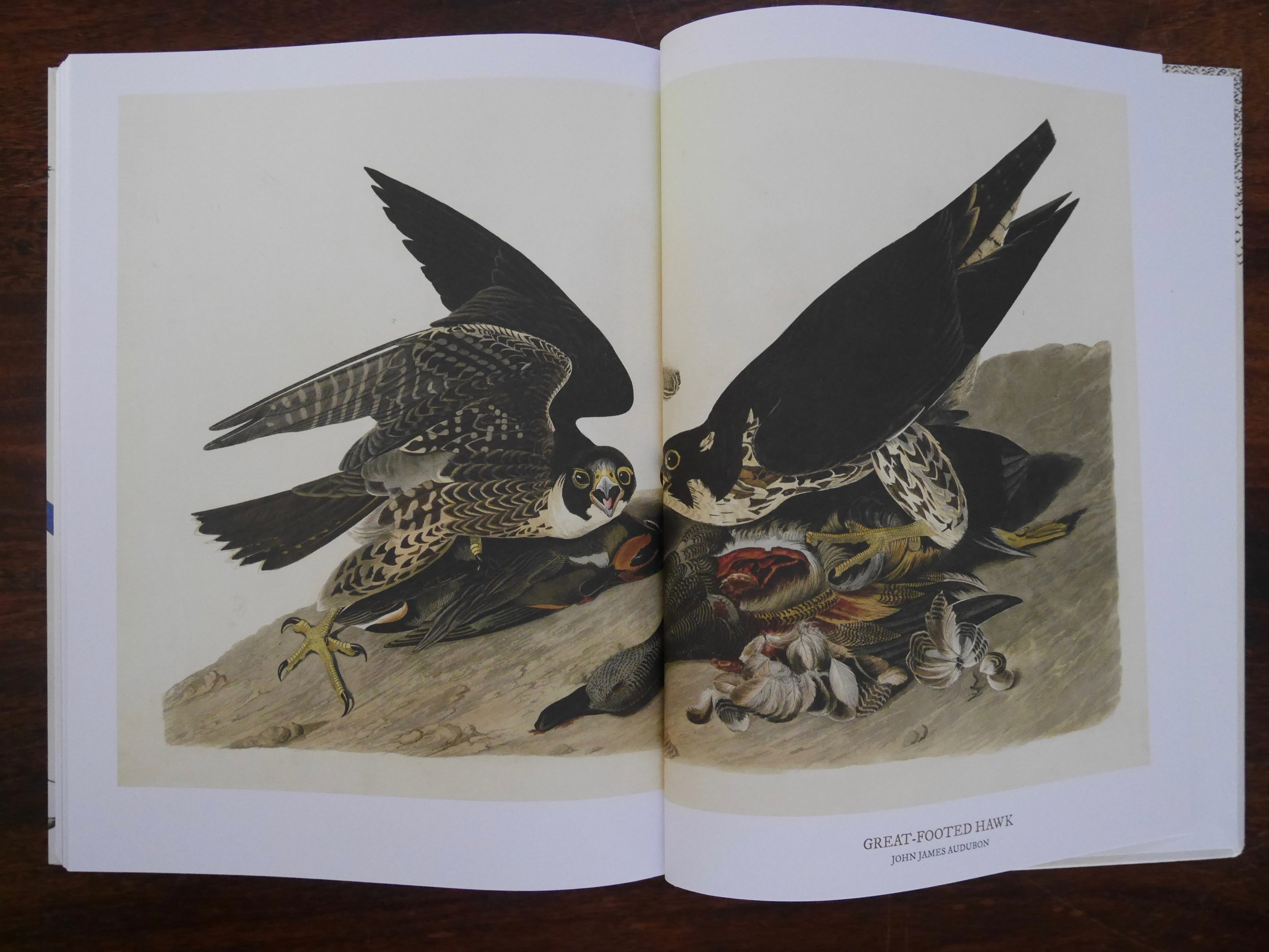Grolleau and Royer's  book includes examples from  Birds of America .