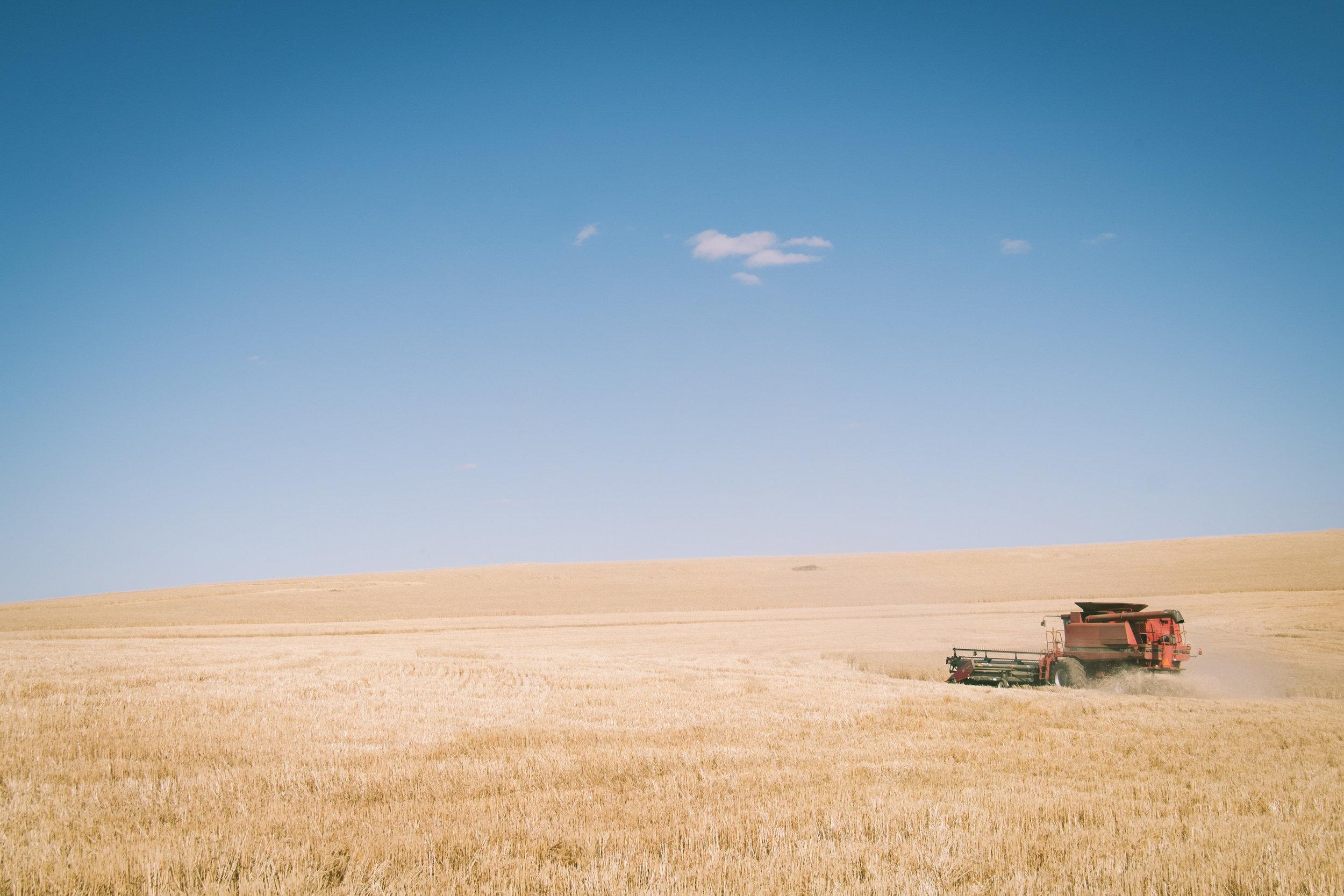 Angie Roe Avon Valley Photographer (0).jpg