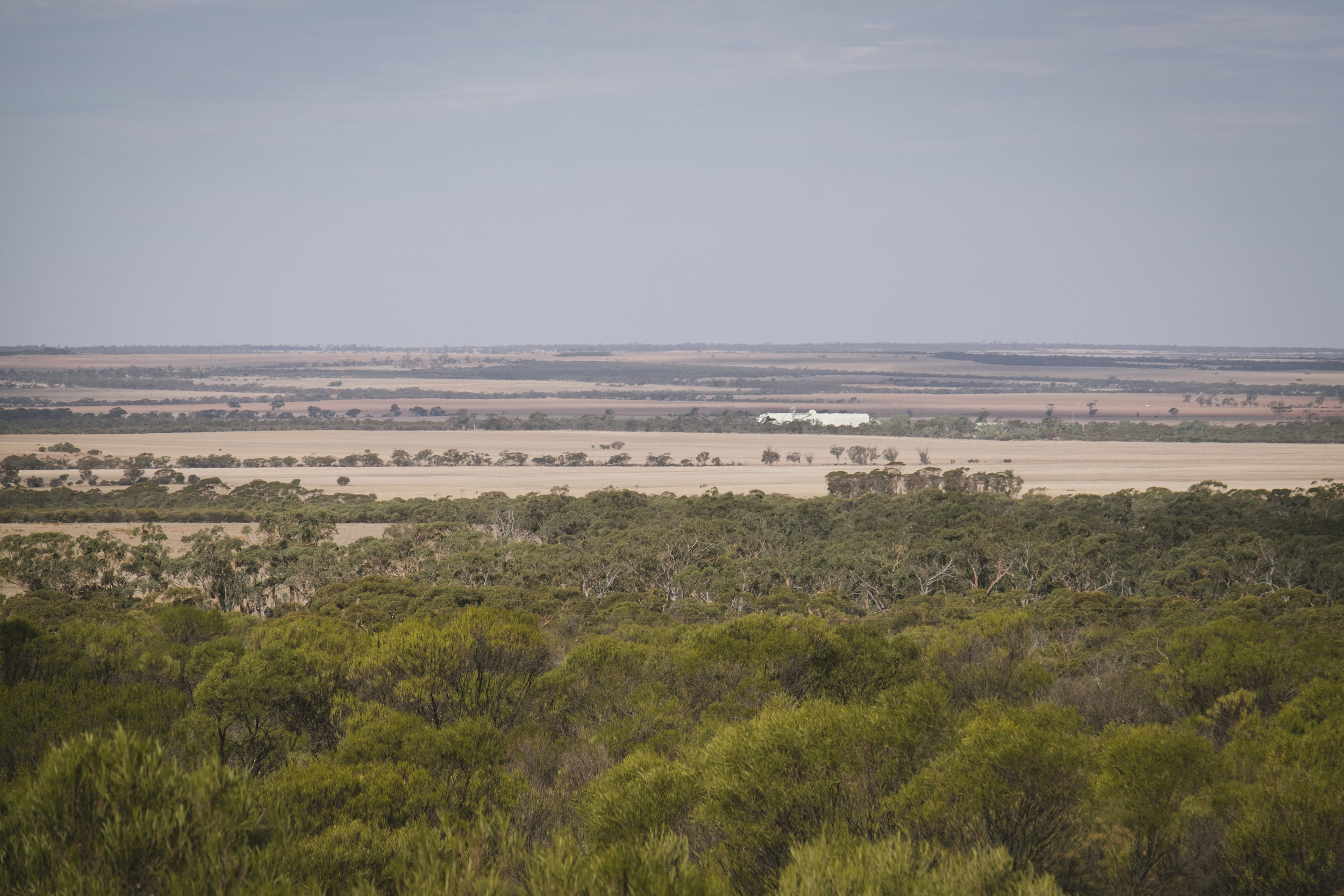 Angie Roe Photography Wheatbelt Rural Farm Landscape Seeding (13).jpg