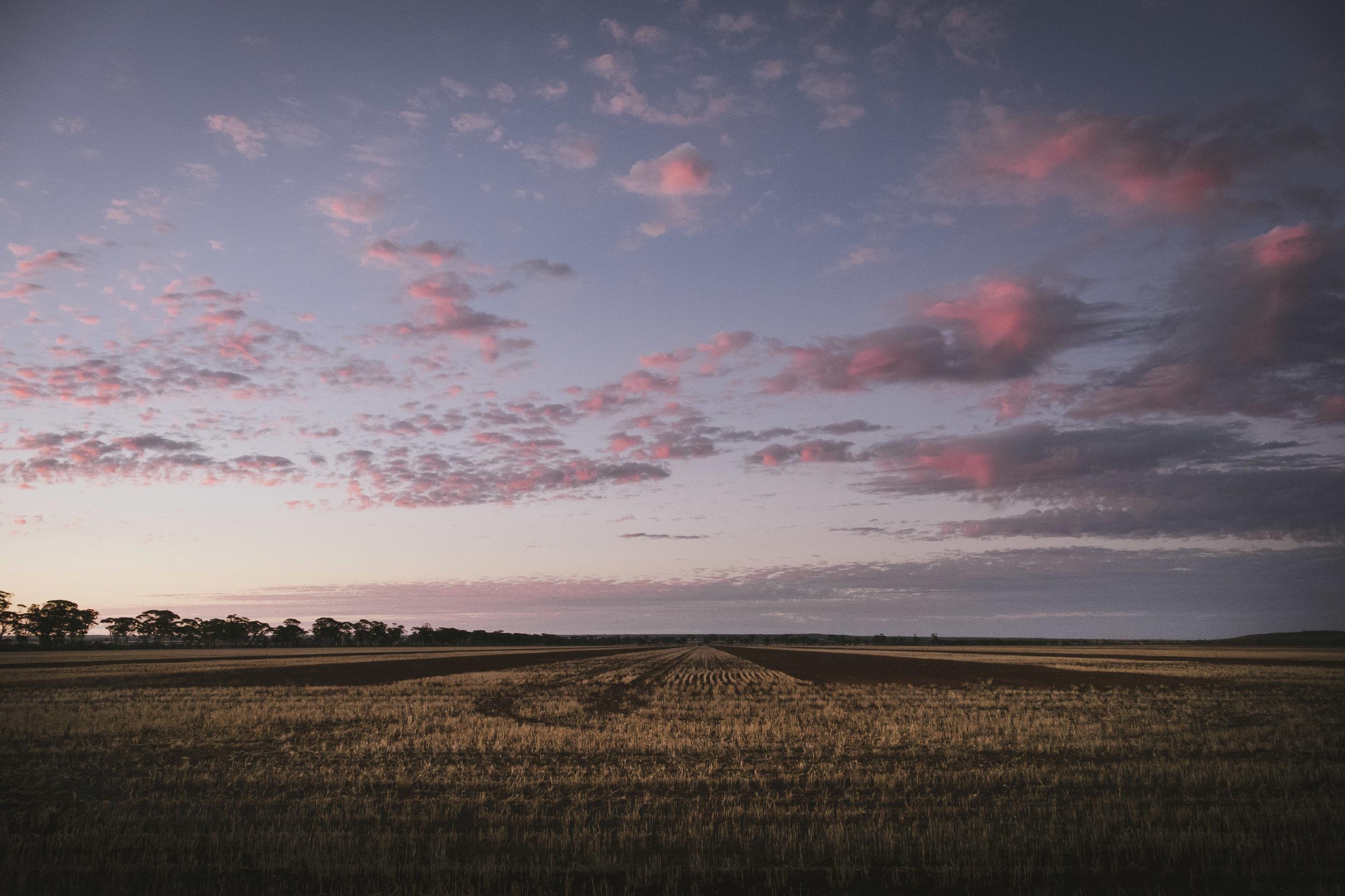 Angie Roe Photography Wheatbelt Rural Farm Landscape Seeding (26).jpg