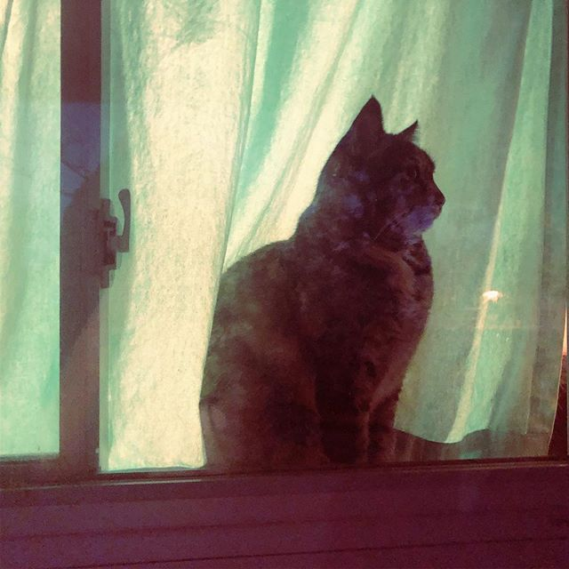 The night watch #catsofinstagram #cat