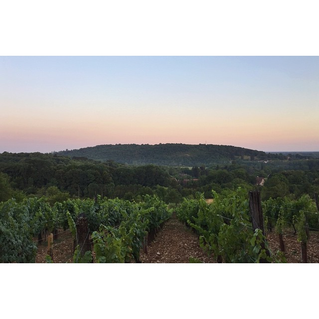 The view on arrival at one out of Raphaël Monnier's 17(!) vineyards