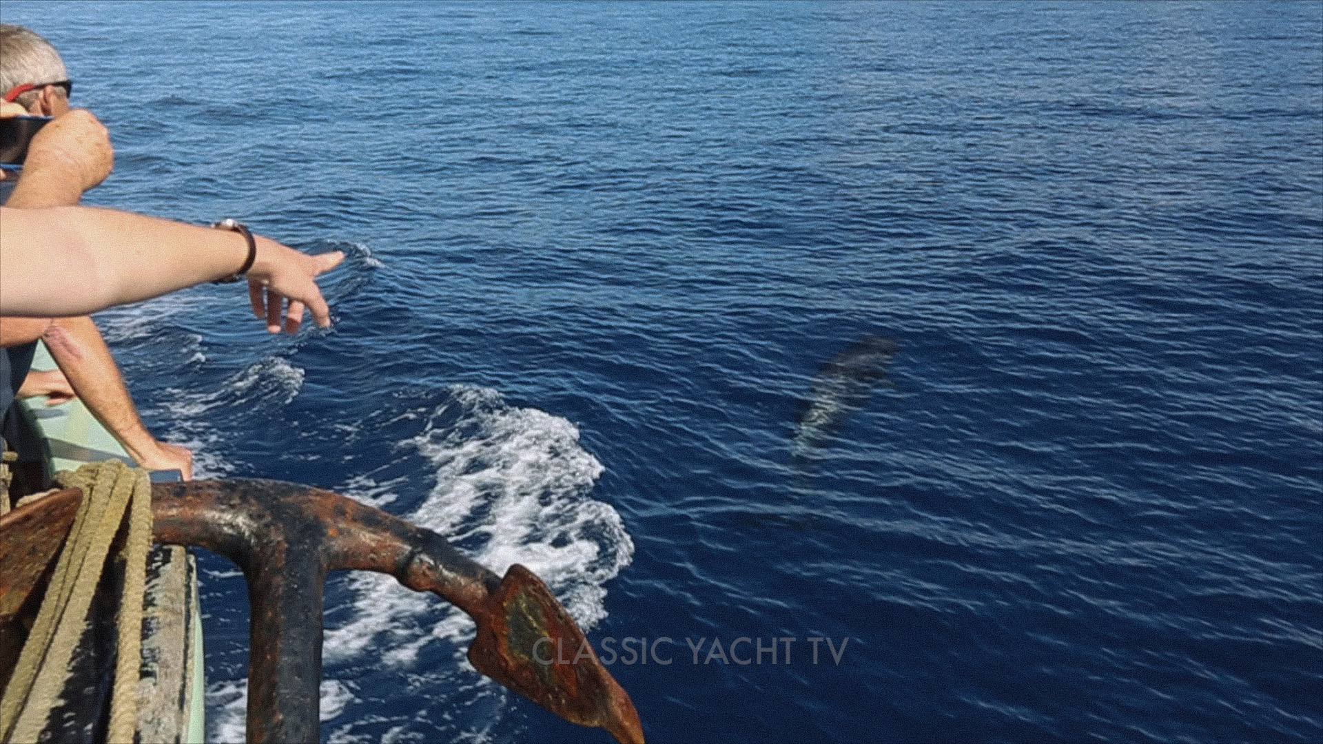 Pilot Whales BE0_CYTV.jpg
