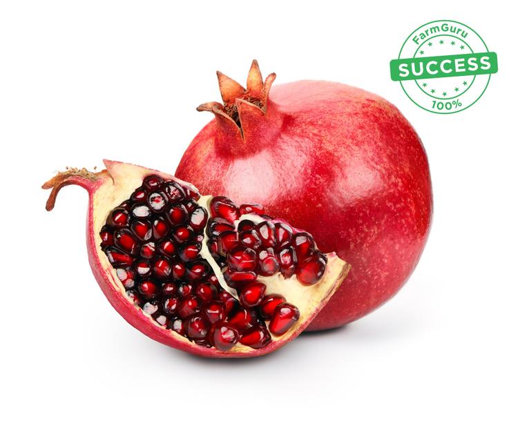 pomegranate.jpg
