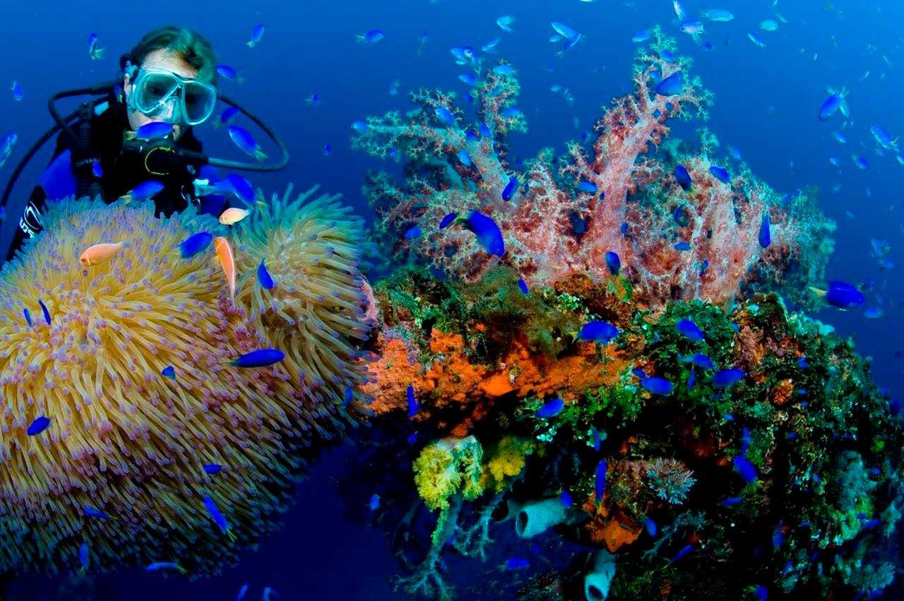 Dive_2000_Coral_Image.jpg
