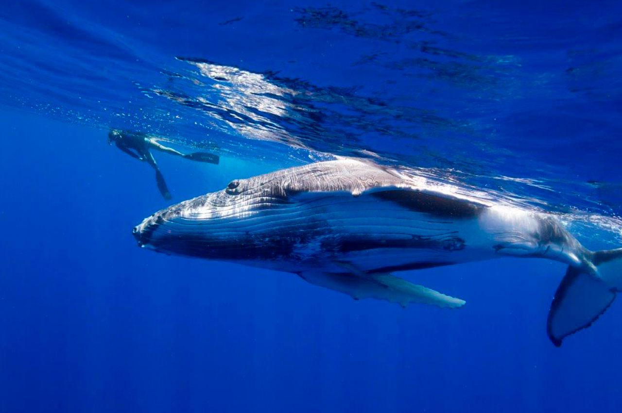 Dive_2000_Whale.jpg