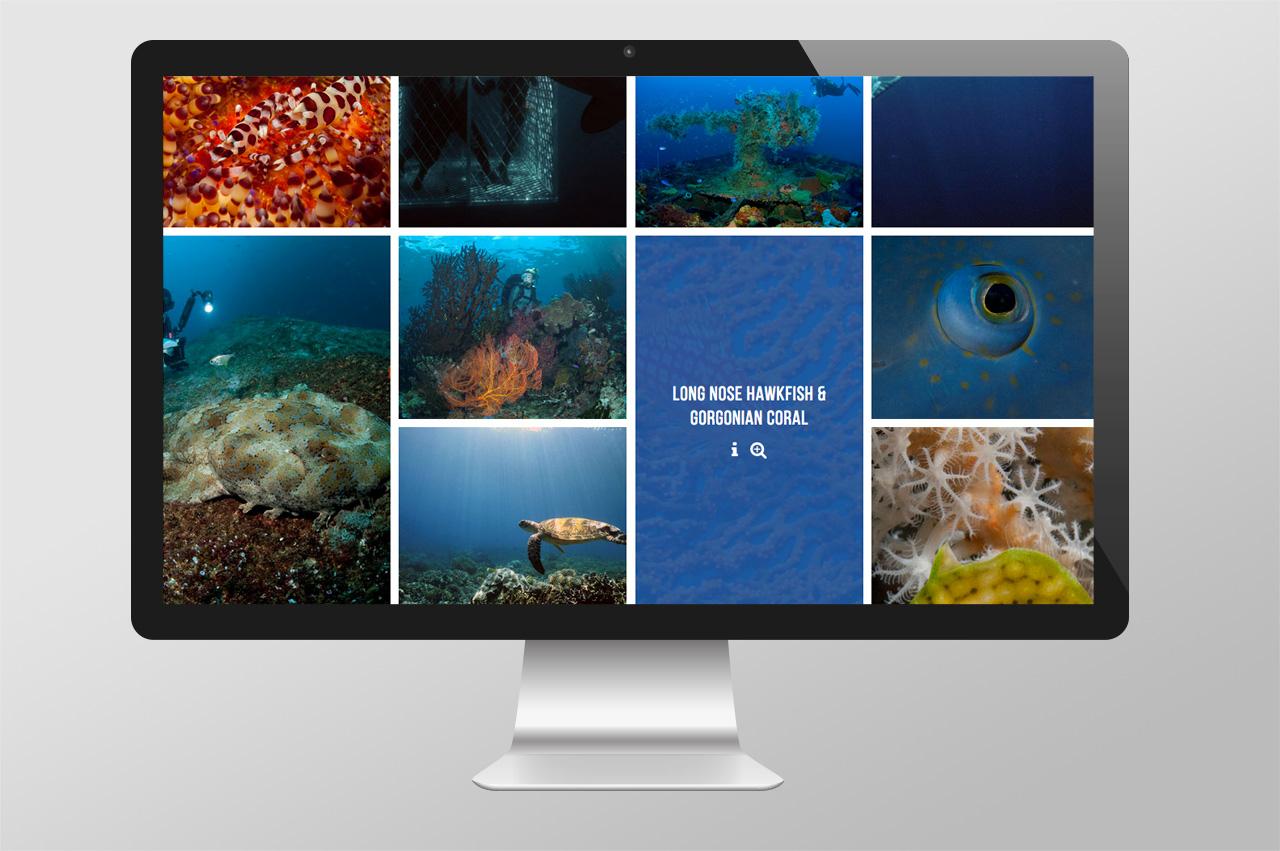 Dive_2000_Web_Gallery.jpg
