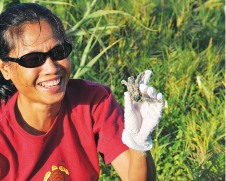 Tee Johannes, a longtime team member, holds a baby turtle during an inventory.