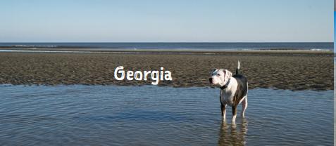 Dog18.PNG