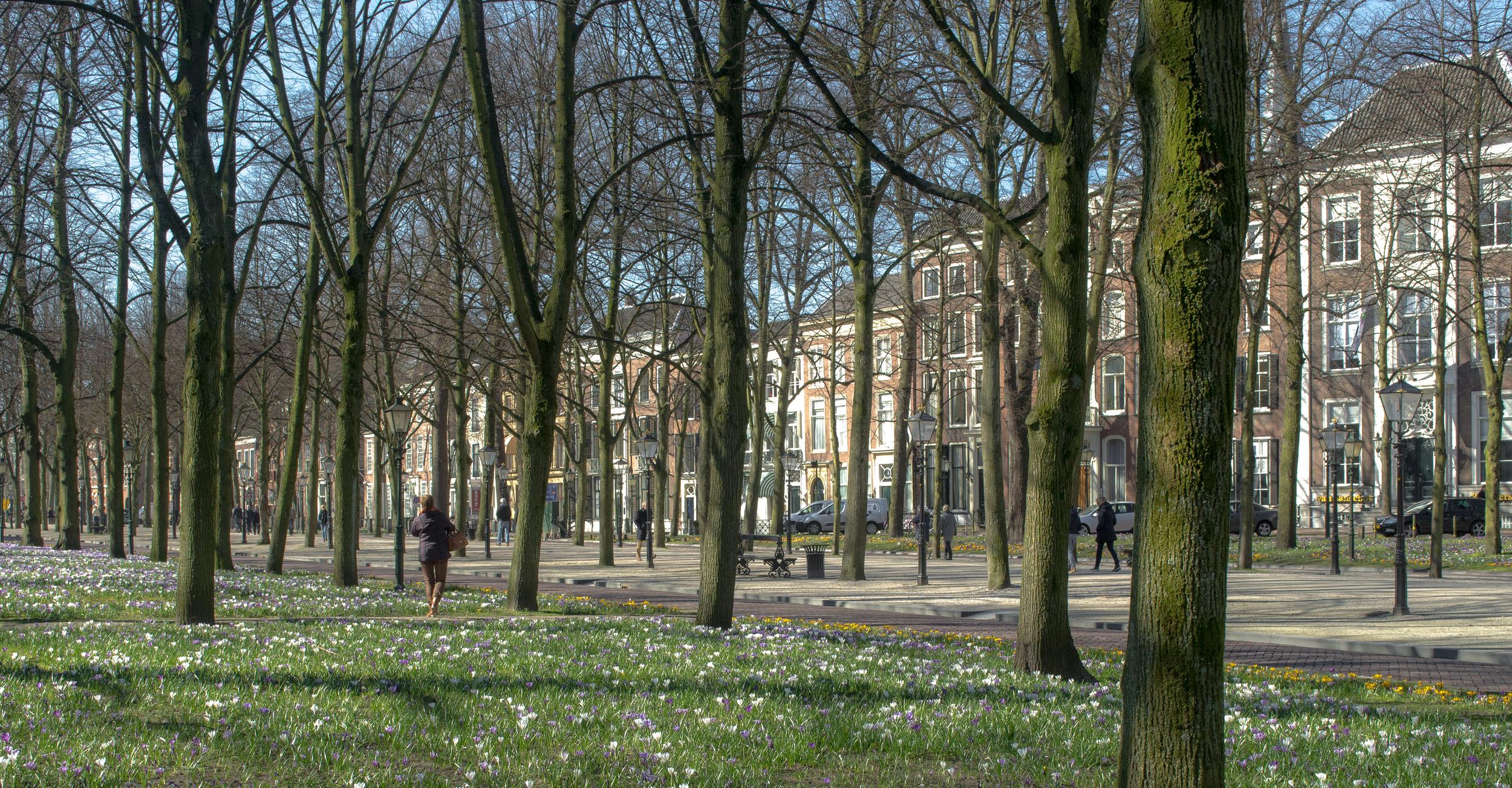 The Hague promenade