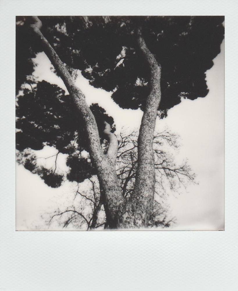 Marinho_Ines_Polaroids002.jpg