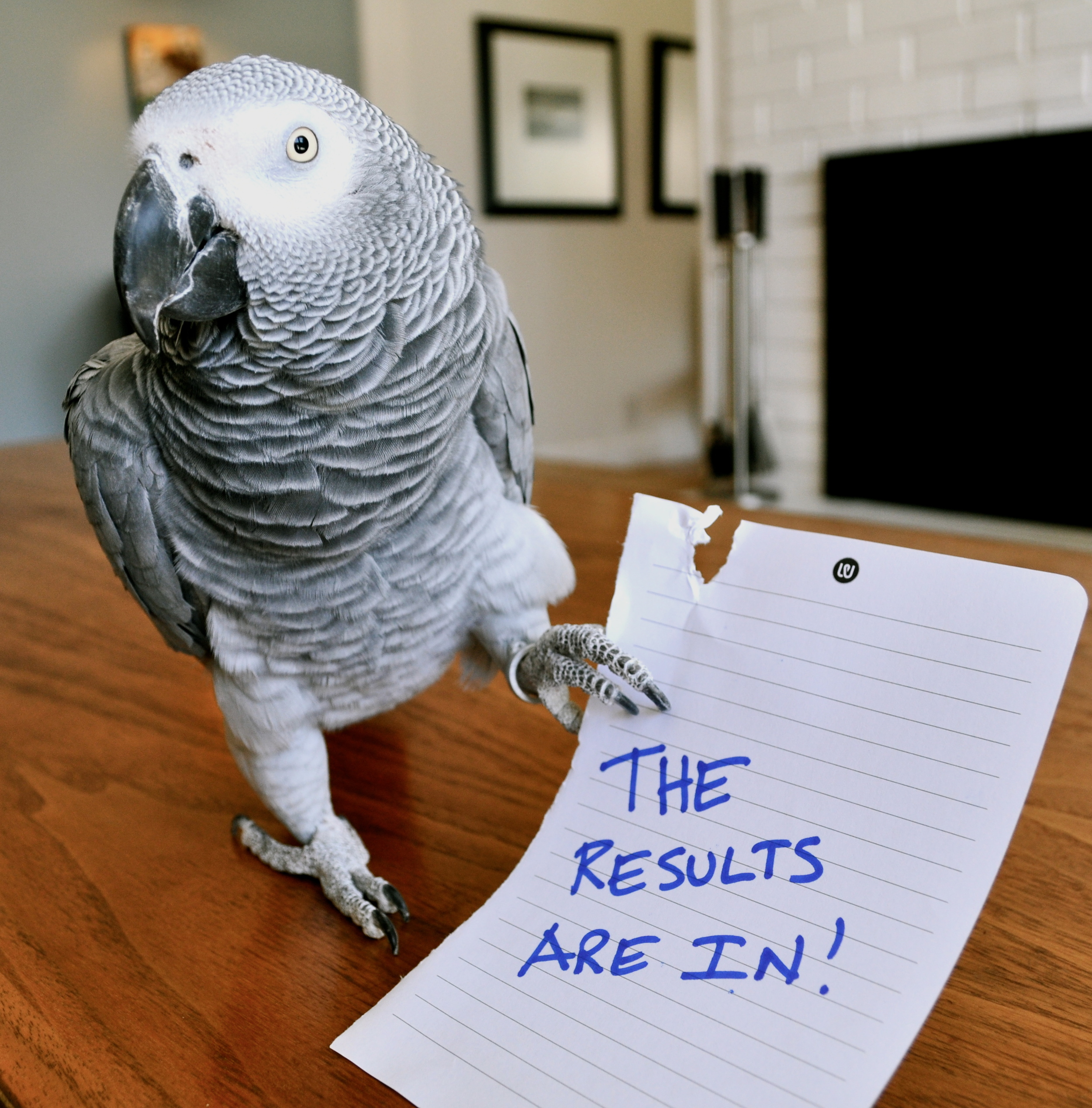 Bird: Results Are In