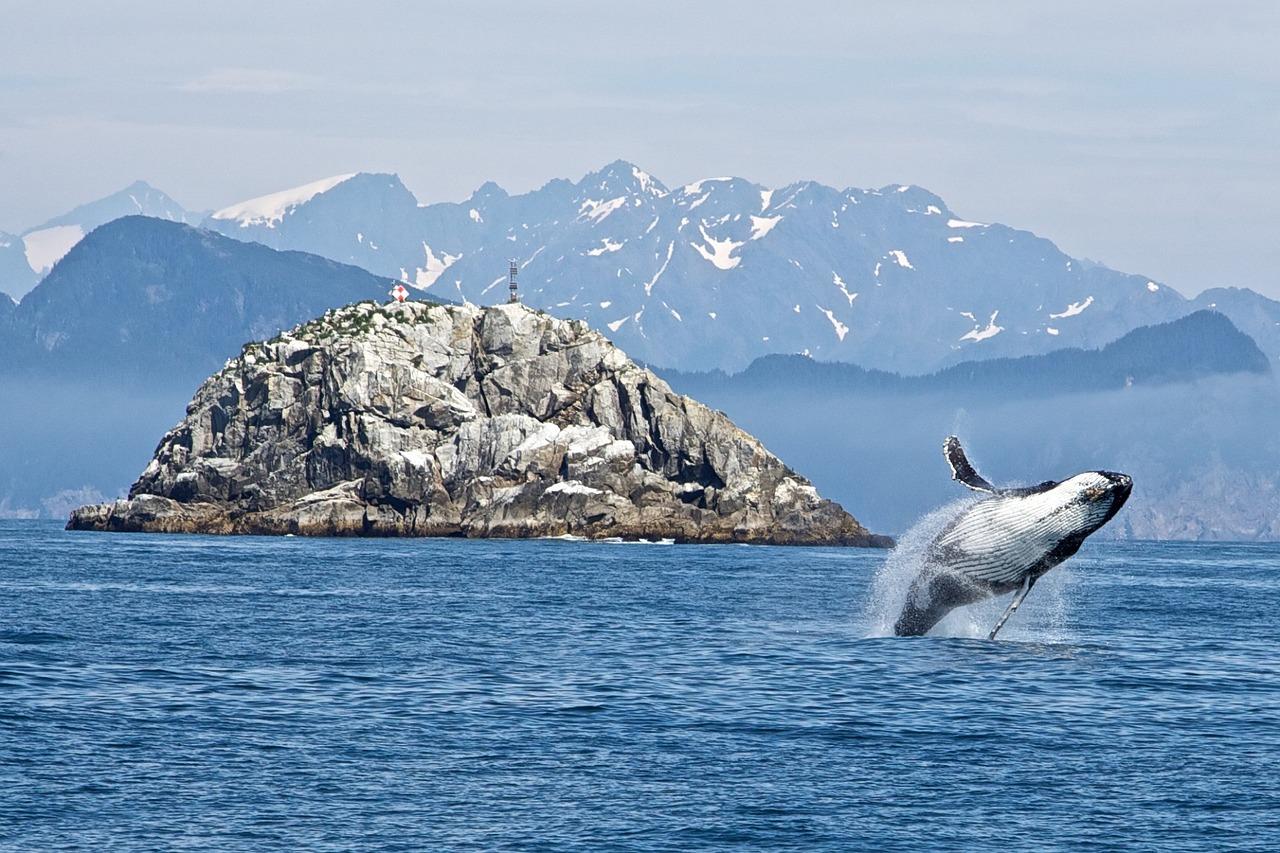 humpback-whale-1744267_1280.jpg