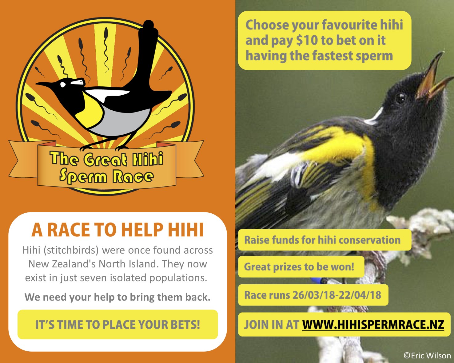 Great Hihi Sperm Race promo