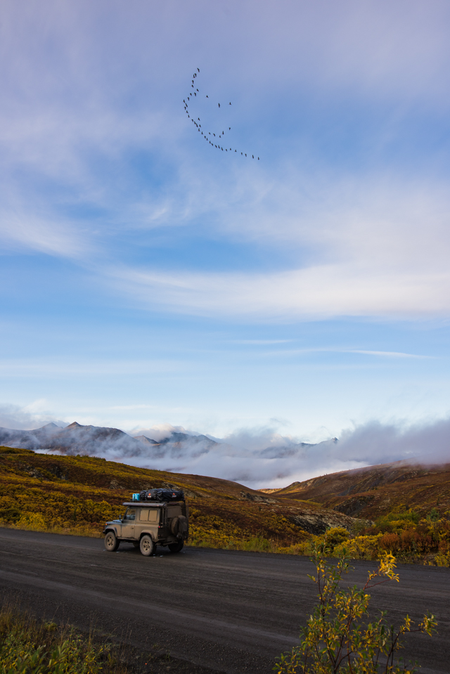 Migrating geese, Tombstone Territorial Park, Dempster Highway, YT