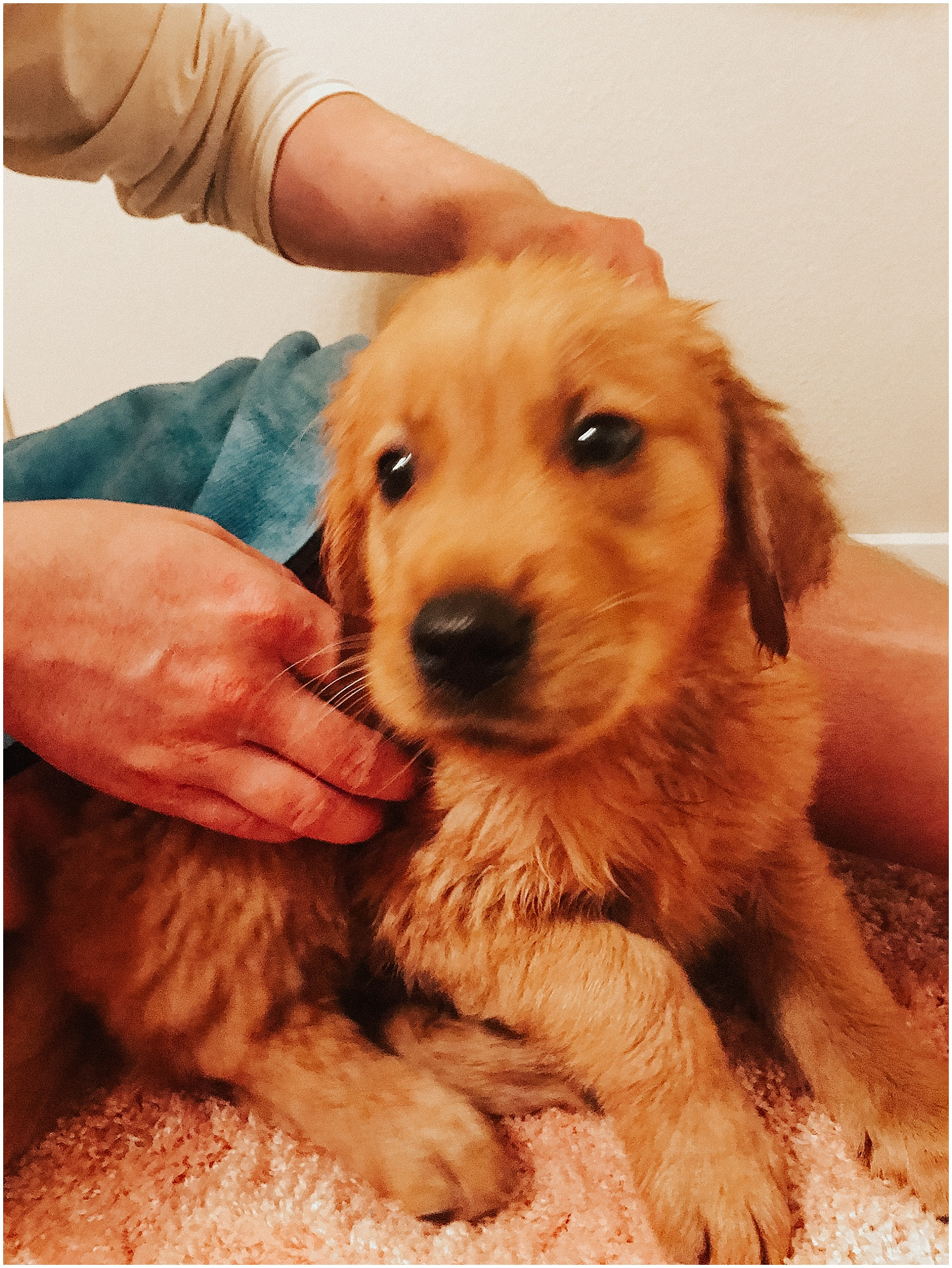 his first bath, not a fan to say the least