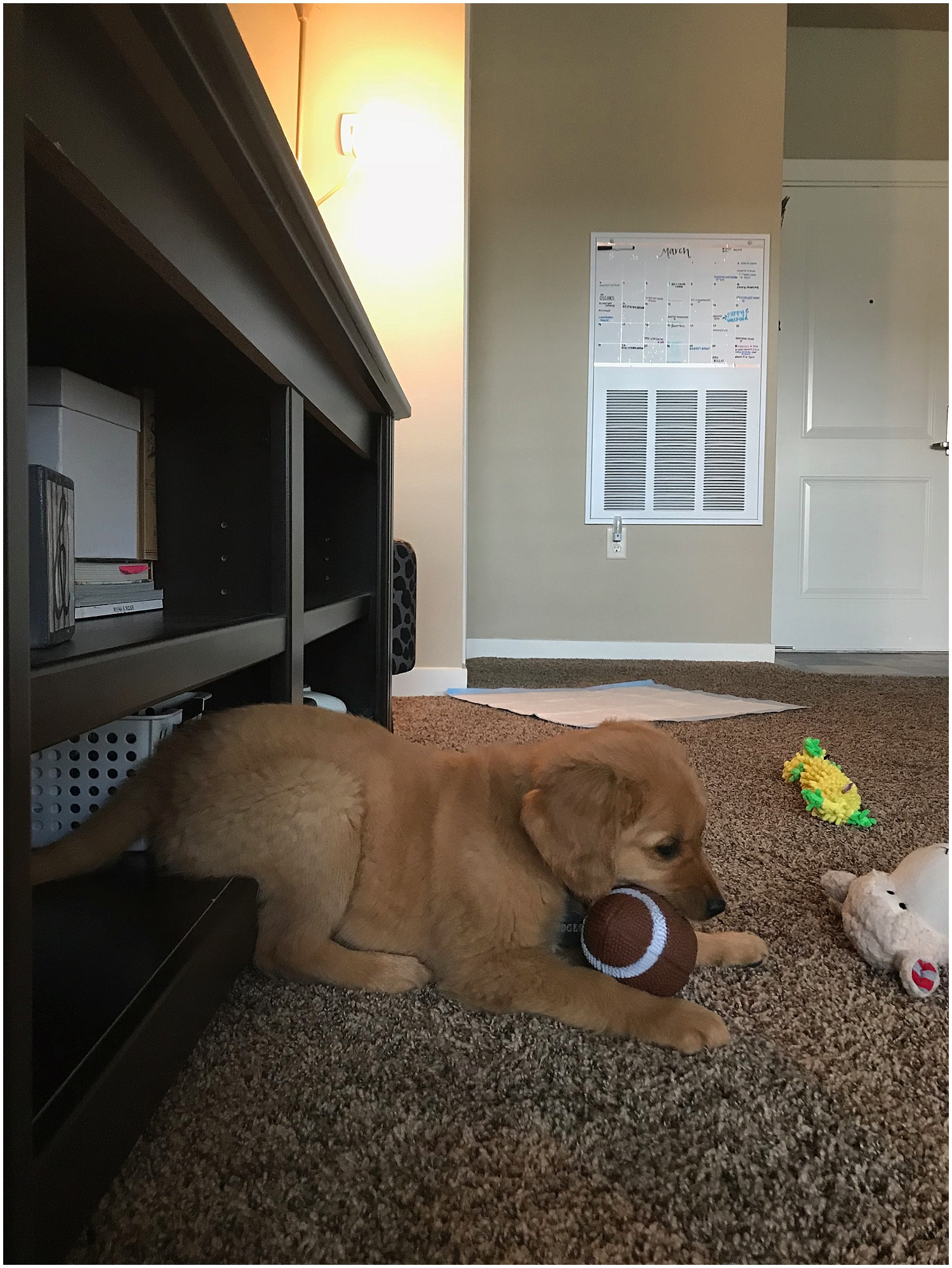 our friends Tay and Sam got dodge this toy… that squeaks… like crazy… safe to say now in July he has special privileges with this toy for our sanity