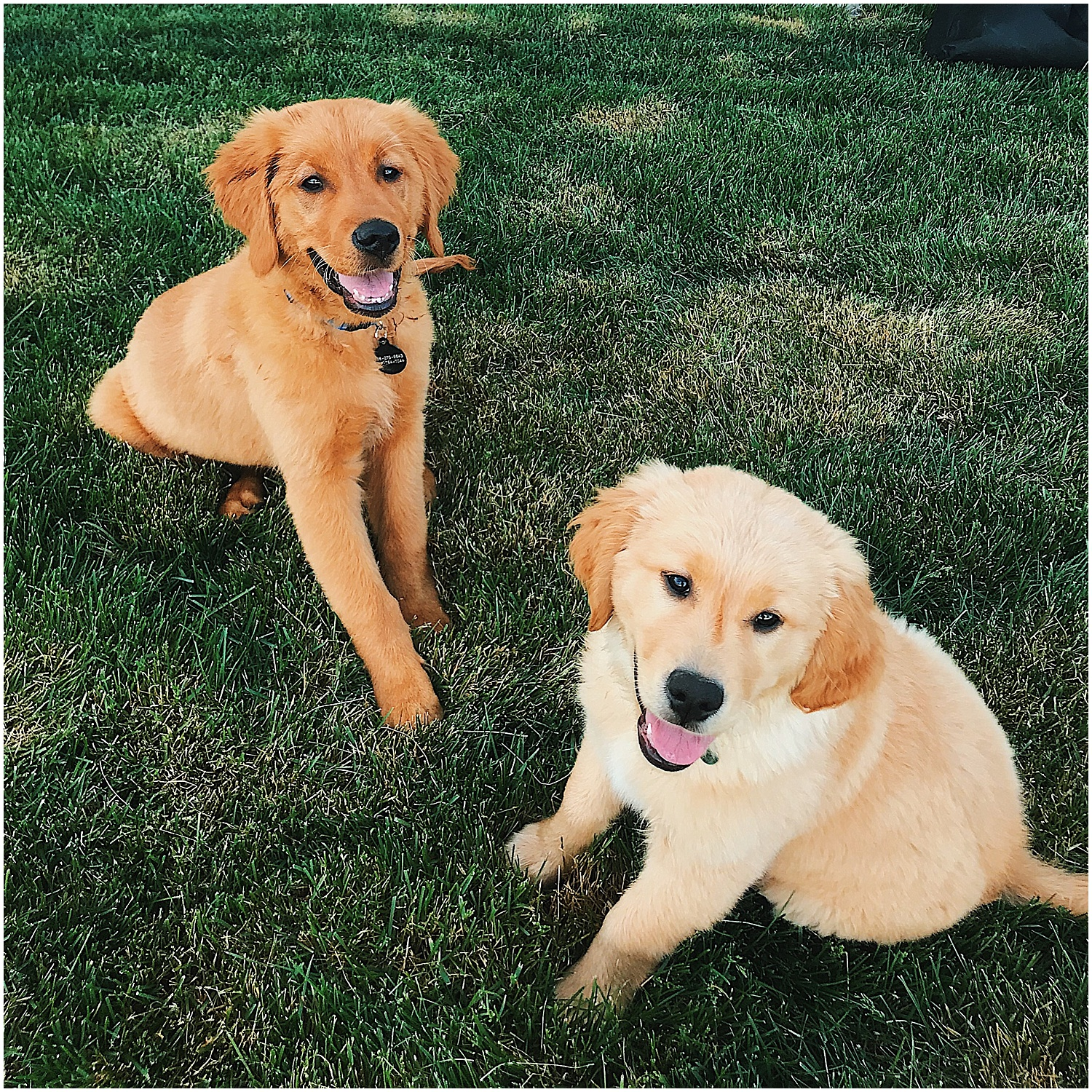 we made it to twin falls and dodger met his new buddy Beau who is also a golden