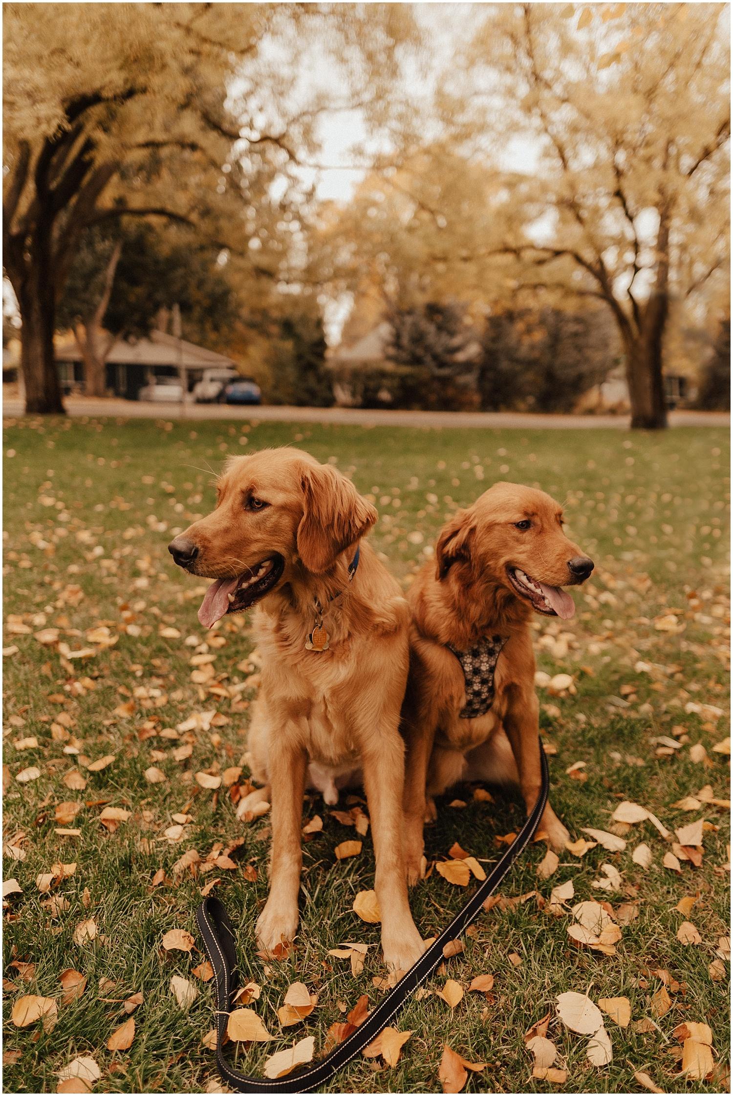 idaho-fall-winter-engagement-golden-retreiver9.jpg