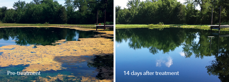 Pre-treatment and post-treatment images of a pond treated with Clear.