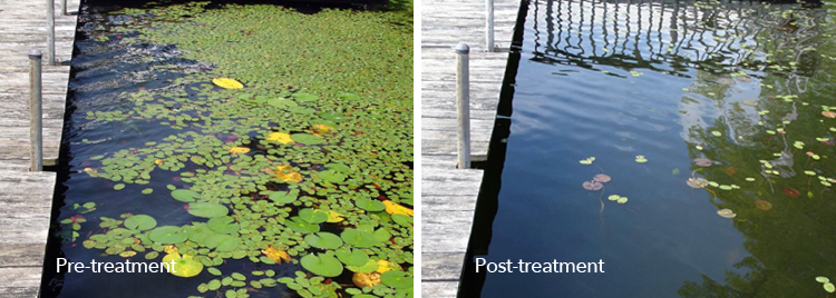 Pre-treatment and post-treatment of a water body with SePRO Total Pond React.