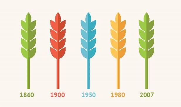 - Le blé moderne possède la même valeur nutritive que celui de nos ancêtres