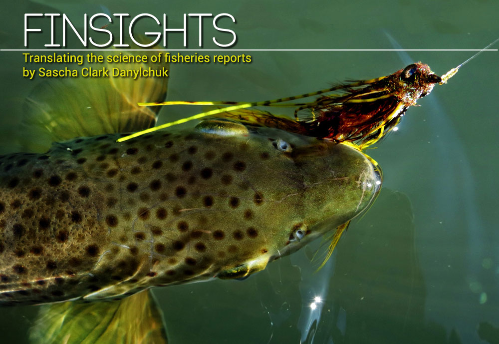 Finsights #8 - Science to help you catch more fish. Bryan Huskey photo.