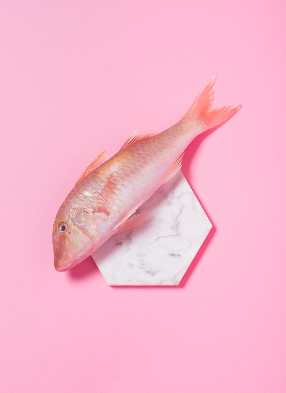 Fish (3 of 4).jpg