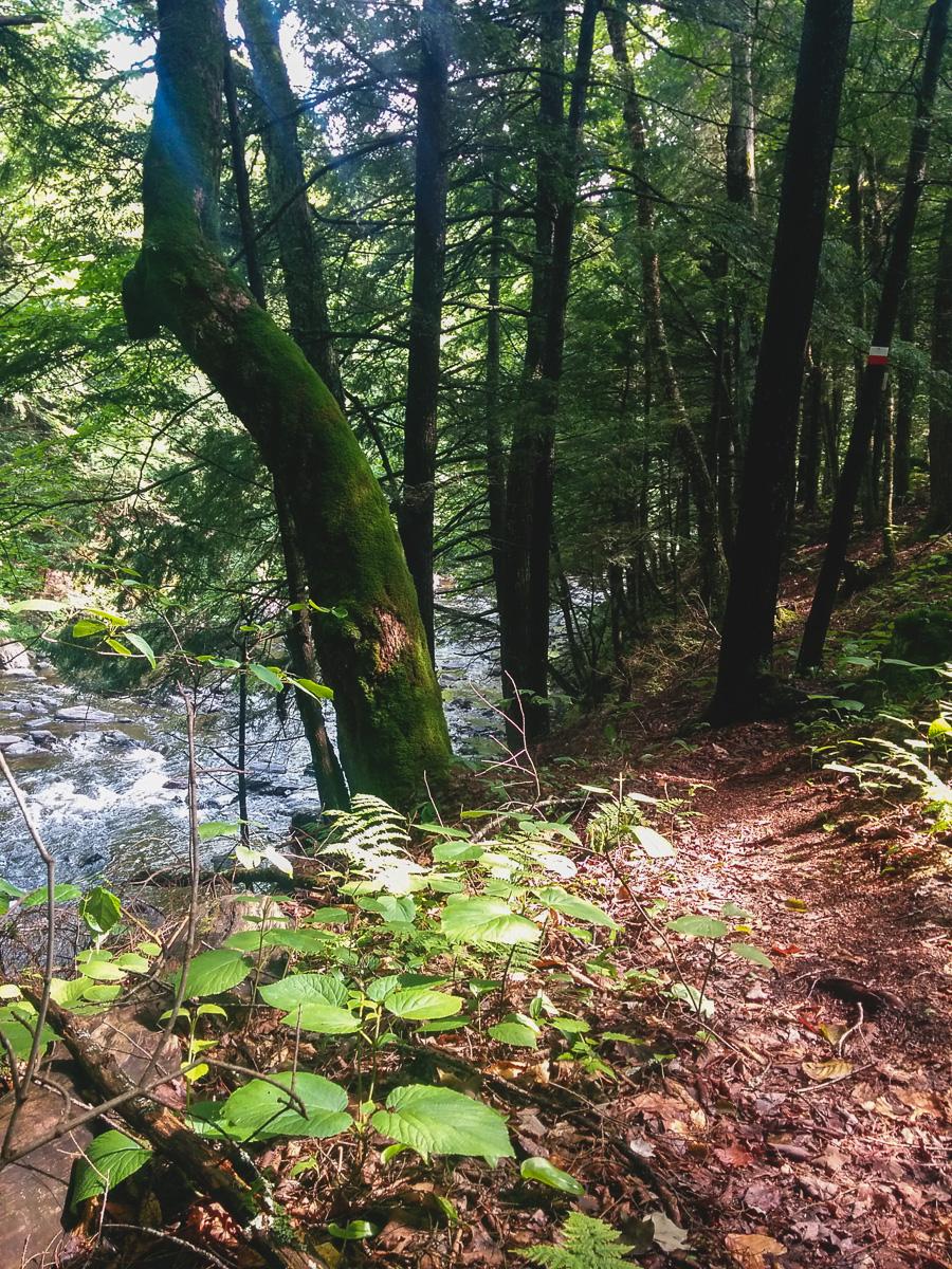 Le sentier suit la rivière au saumon