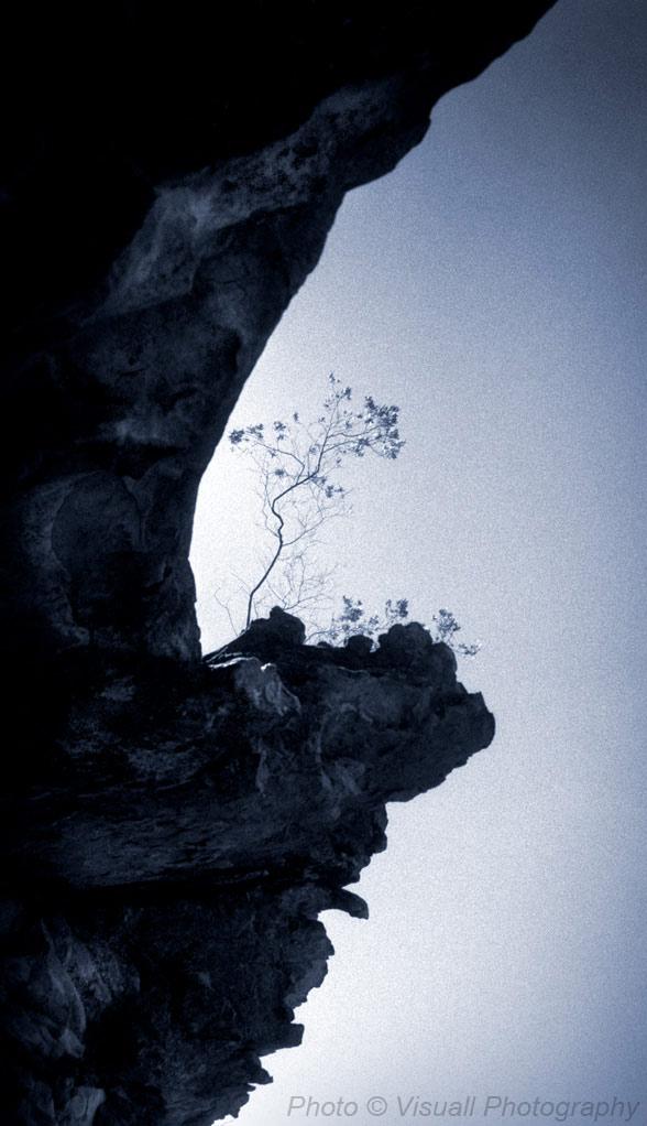 cliffhanger-tree.jpg