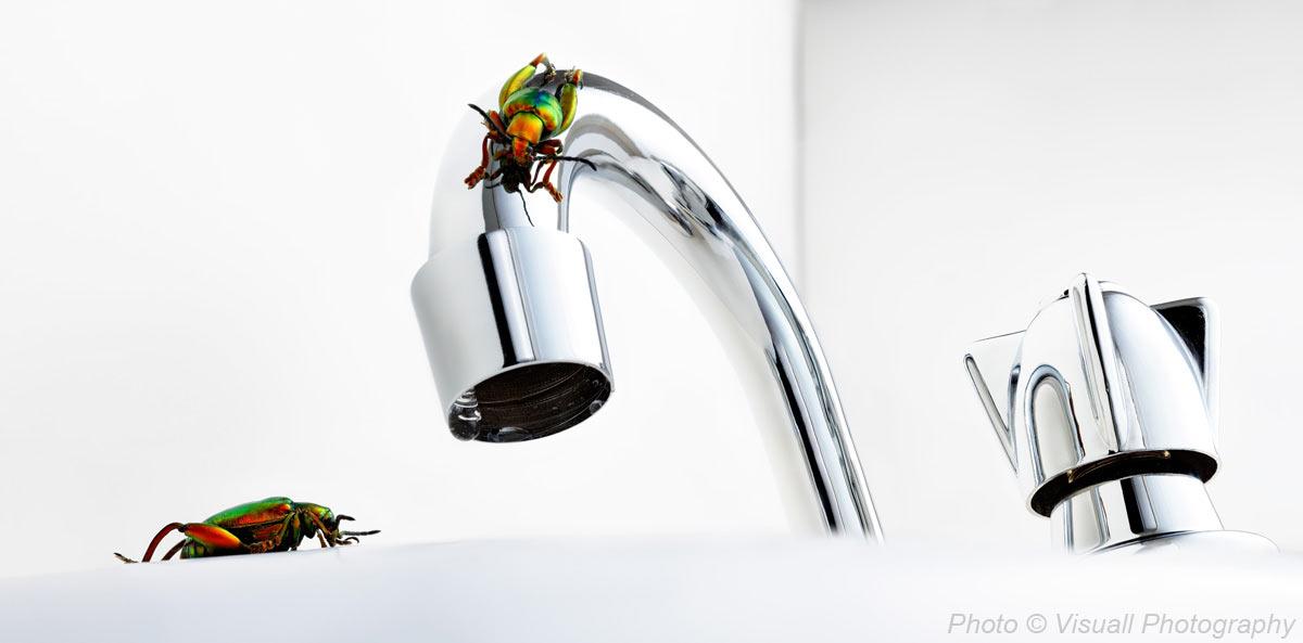 mbowden-bugs.jpg