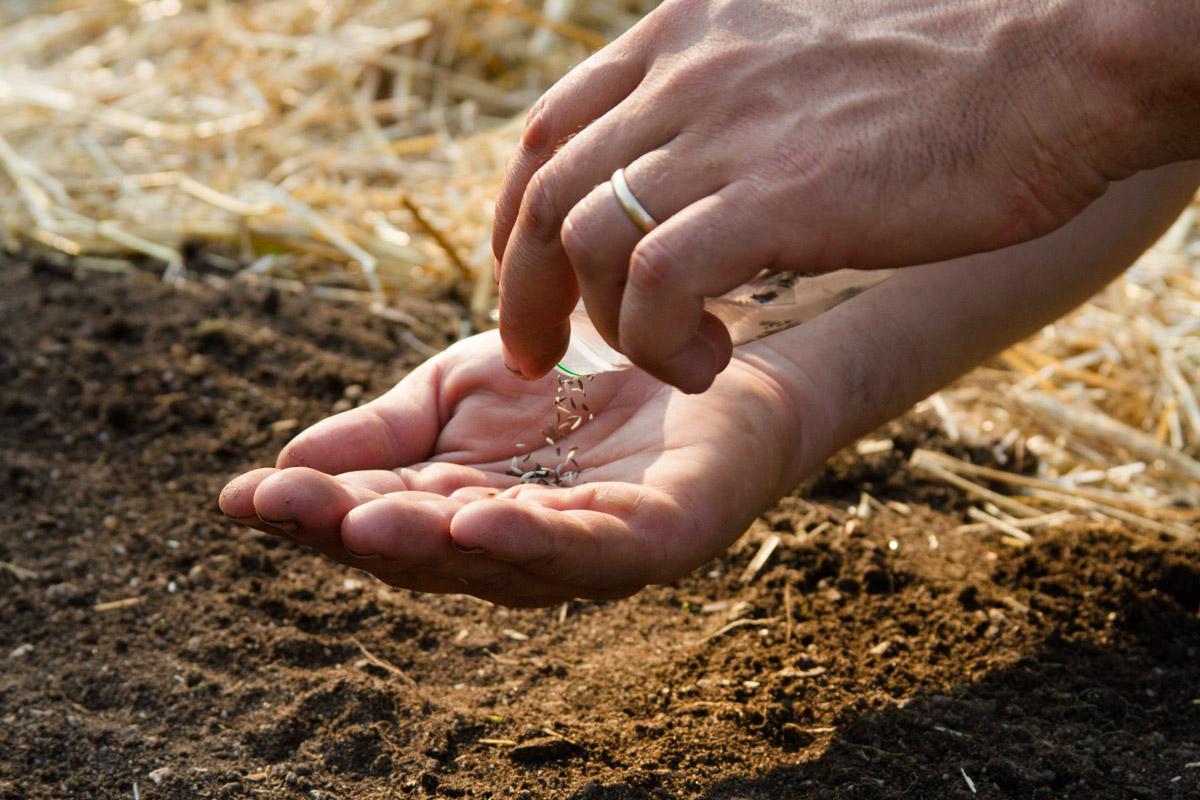 The_Growing_Seed_10.jpg