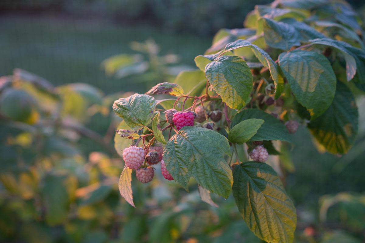The_Growing_Seed_27.jpg